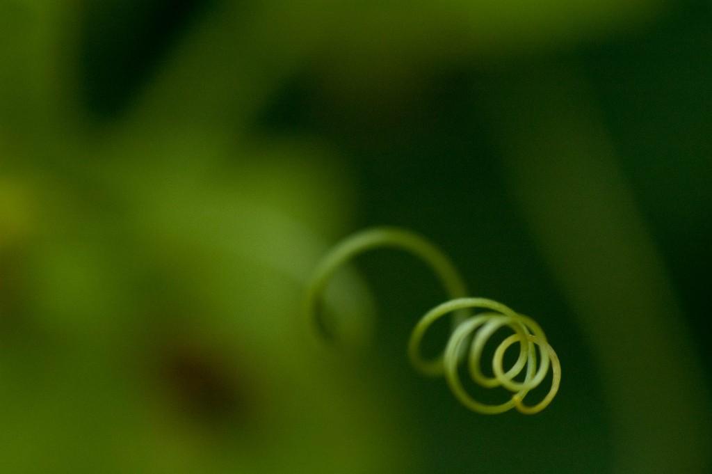 Spirale_Natur