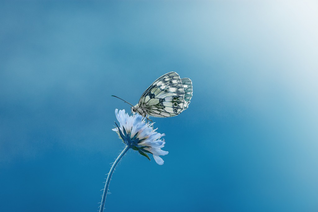 Schmetterling_02