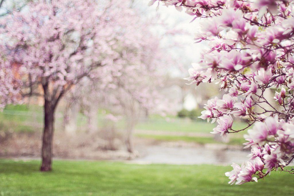 Shiatsu im Frühling hilft bei Migräne